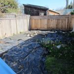 Backyard improvements (Sod)